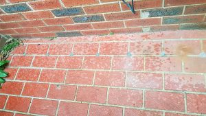 termite, termites, Melbourne termite, termite Melbourne, Melbourne termites, termites Melbourne, termite inspection, termite protection, termite management plan AS3660, preconstruction termite barrier, Melbourne termite inspection, Melbourne termite inspection AS4349.3, preconstruction termite protection, preconstruction termite management plan, Kordon preconstruction termite barrier, Greenzone preconstruction termite barrier, Homeguard preconstruction termite barrier, Altis preconstruction reticulation system, TermX preconstruction replenishment system, termite inspection Melbourne, termite inspection AS4349.3 Melbourne, termite inspection Melbourne, termite protection Melbourne, termite management plan AS3660 Melbourne, Melbourne preconstruction termite protection, preconstruction termite barrier Melbourne, Melbourne preconstruction termite barrier, Melbourne preconstruction termite management plan, preconstruction termite management plan Melbourne, Kordon preconstruction termite barrier Melbourne, Greenzone preconstruction termite barrier Melbourne, Altis preconstruction reticulation system Melbourne, TermX preconstruction replenishment system Melbourne, Termidor, Termidor HE, Termidor Melbourne, Termidor HE Melbourne, Termidor residual termiticide, Termidor HE residual termiticide, Premise, Premise Melbourne, Premise residual termiticide, What are termites, What do termites look like, specialist termite protection, specialist termite protection Melbourne, Melbourne specialist termite protection, termite experts, termite control expert Melbourne, Melbourne termite control expert, termite inspection Melbourne, termite inspection AS4349.3 Melbourne, termite eradication, termite eradication Melbourne, Melbourne termite eradication, pest inspection, pest inspection Melbourne, Melbourne pest inspection, best termite control, best termite control Melbourne, Melbourne best termite control, termite removal, termite removal Melbourne, Melbourne termite removal, termite control near me, termite protection near me, termite prevention near me, termite prevention, termite prevention Melbourne, Melbourne termite prevention, termite control near me Melbourne, Melbourne termite control near me